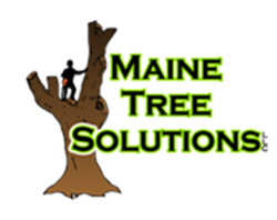 Maine Tree Solutions